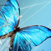 Синята пеперуда (Morpho peleides) – символът на InSighting